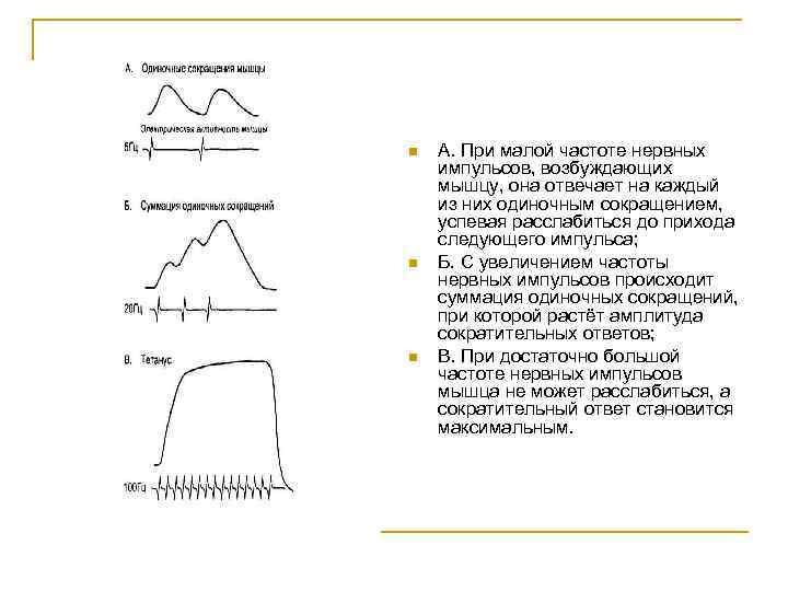 n n n А. При малой частоте нервных импульсов, возбуждающих мышцу, она отвечает на