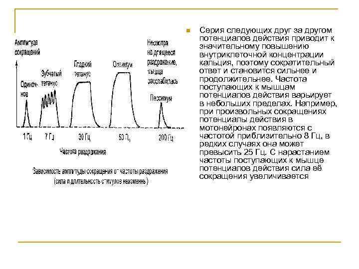 n Серия следующих друг за другом потенциалов действия приводит к значительному повышению внутриклеточной концентрации