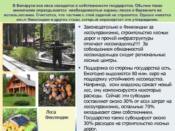 В Беларуси все леса находятся в собственности государства. Обычно такая монополия оправдывается необходимостью охраны