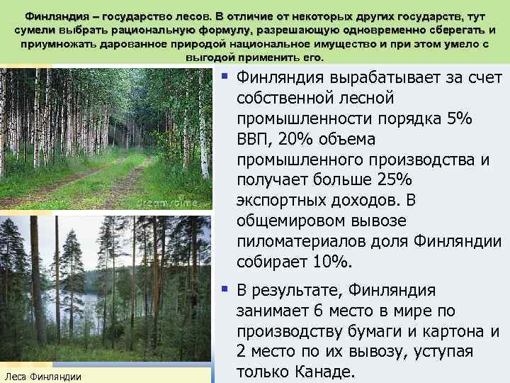 Финляндия – государство лесов. В отличие от некоторых других государств, тут сумели выбрать рациональную