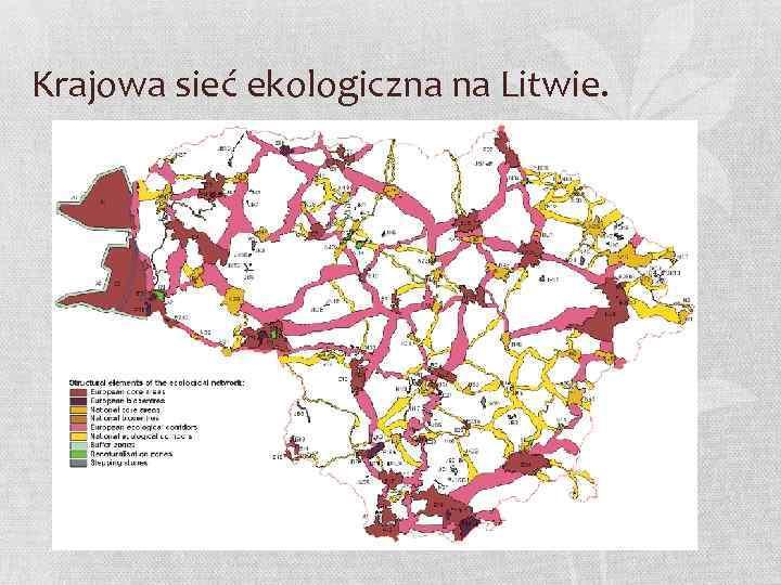 Krajowa sieć ekologiczna na Litwie.