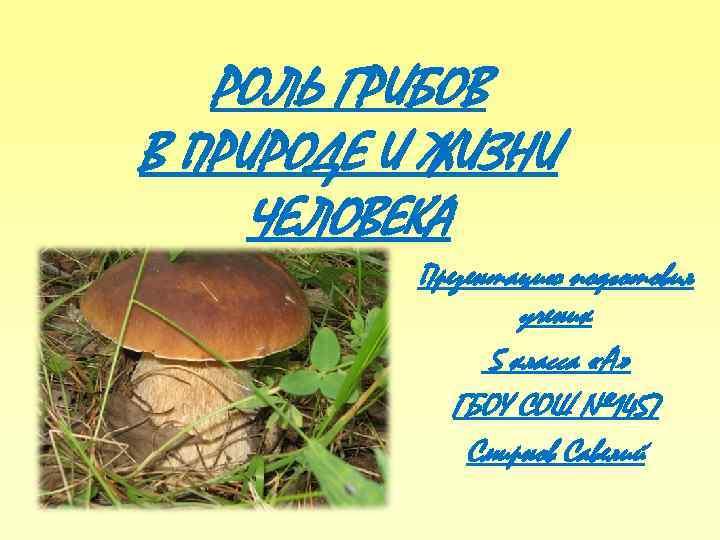 картинка роль грибов в жизни человека значении фото вымунутым