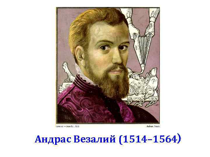 Андрас Везалий (1514– 1564)