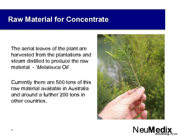 Raw Material for Concentrate The aerial leaves of the plant are harvested from the