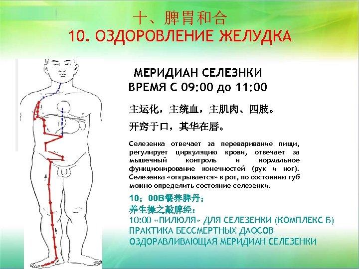 十、脾胃和合 10. ОЗДОРОВЛЕНИЕ ЖЕЛУДКА МЕРИДИАН СЕЛЕЗНКИ ВРЕМЯ С 09: 00 до 11: 00 主运化,主统血,主肌肉、四肢。