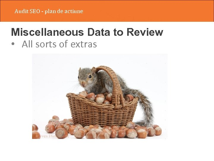 Audit SEO - plan de actiune Miscellaneous Data to Review • All sorts of
