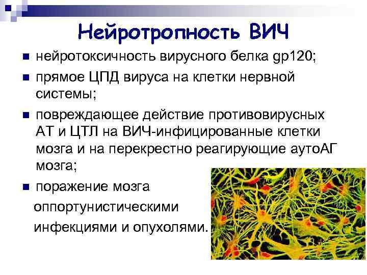 Нейротропность ВИЧ нейротоксичность вирусного белка gp 120; n прямое ЦПД вируса на клетки нервной