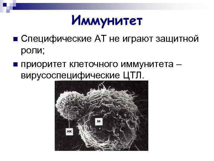 Иммунитет Специфические АТ не играют защитной роли; n приоритет клеточного иммунитета – вирусоспецифические ЦТЛ.