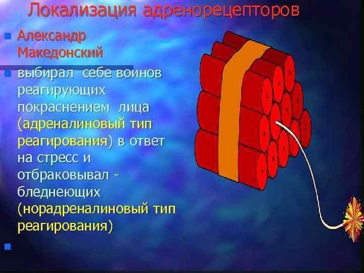Локализация адренорецепторов n n n Александр Македонский выбирал себе воинов реагирующих покраснением лица (адреналиновый