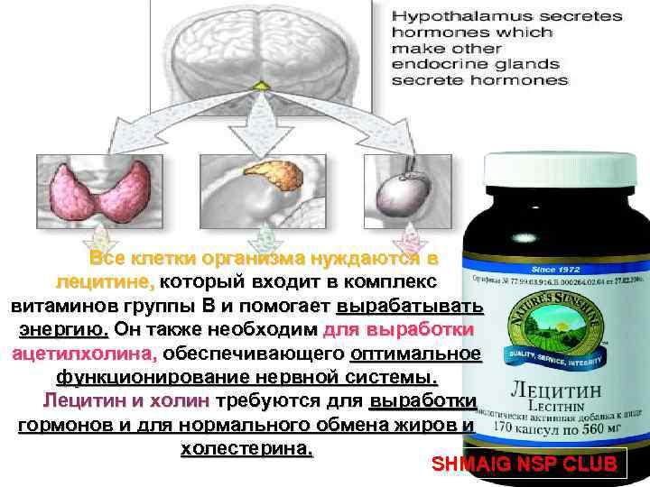 Все клетки организма нуждаются в лецитине, который входит в комплекс витаминов группы В и