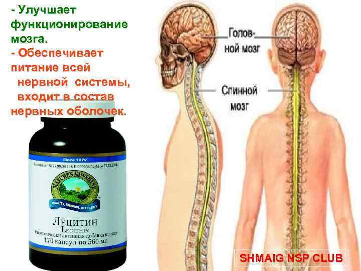 - Улучшает функционирование мозга. - Обеспечивает питание всей нервной системы, входит в состав нервных
