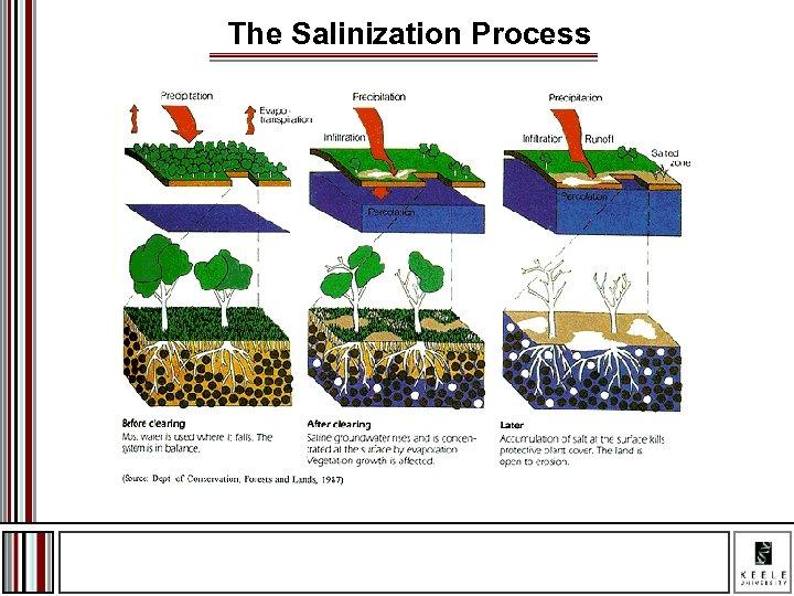 The Salinization Process