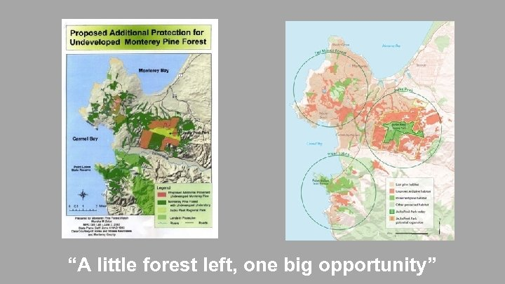 """A little forest left, one big opportunity"""