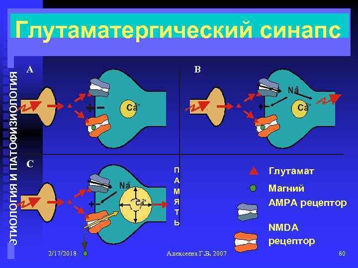 ЭТИОЛОГИЯ И ПАТОФИЗИОЛОГИЯ Глутаматергический синапс A B + Na 2+ Ca C + Na