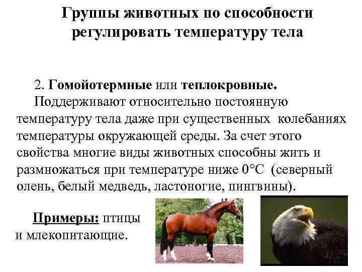 Группы животных по способности регулировать температуру тела 2. Гомойотермные или теплокровные. Поддерживают относительно постоянную