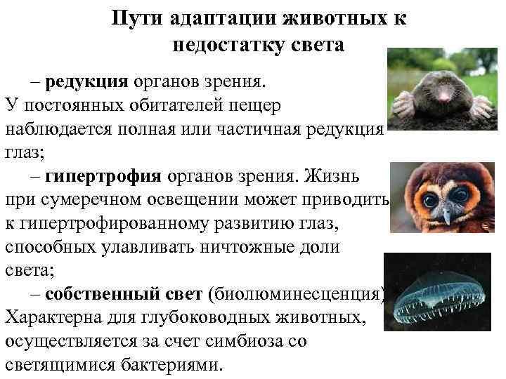 Пути адаптации животных к недостатку света – редукция органов зрения. У постоянных обитателей пещер