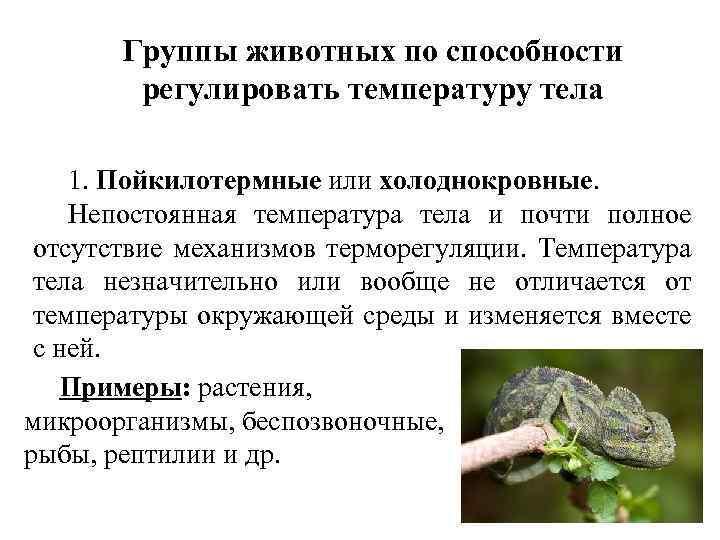 Группы животных по способности регулировать температуру тела 1. Пойкилотермные или холоднокровные. Непостоянная температура тела