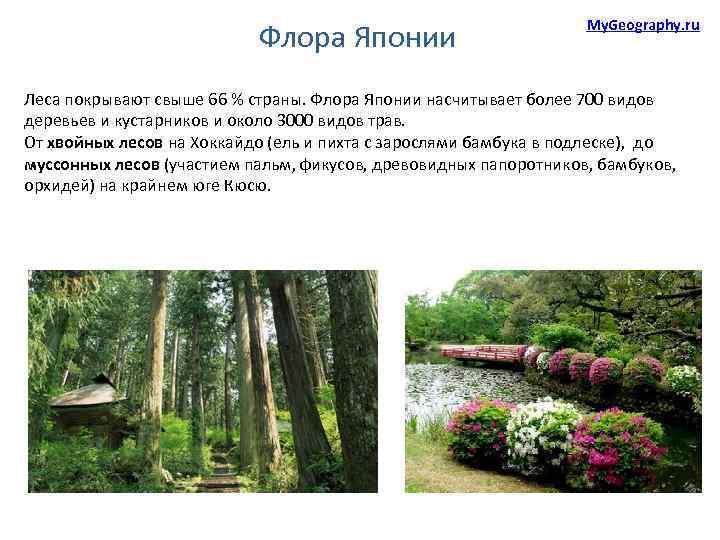 Флора Японии My. Geography. ru Леса покрывают свыше 66 % страны. Флора Японии насчитывает