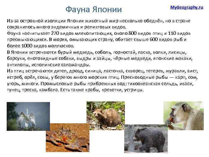 Фауна Японии My. Geography. ru Из-за островной изоляции Японии животный мир несколько обеднён, но