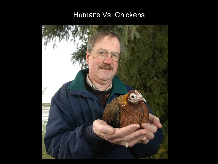 Humans Vs. Chickens