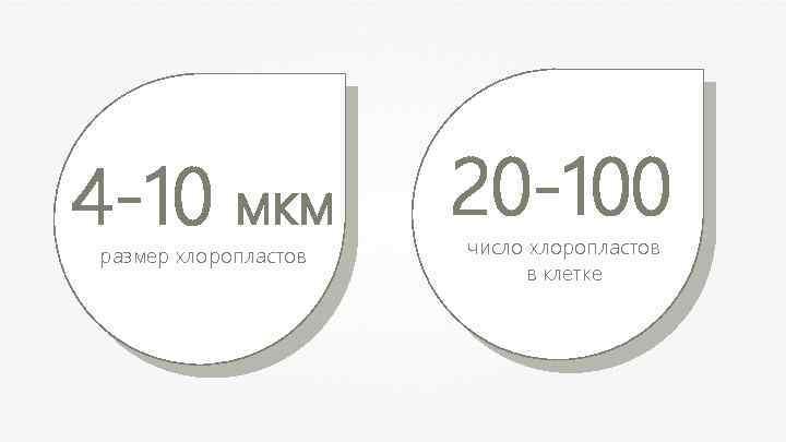 4 -10 мкм размер хлоропластов 20 -100 число хлоропластов в клетке