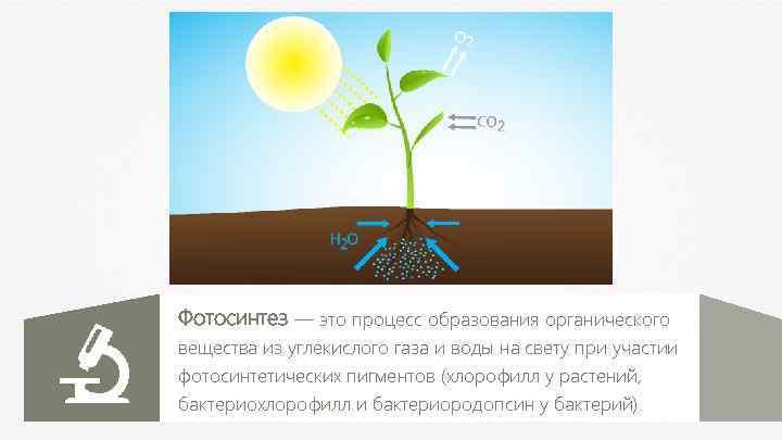 Фотосинтез — это процесс образования органического вещества из углекислого газа и воды на свету