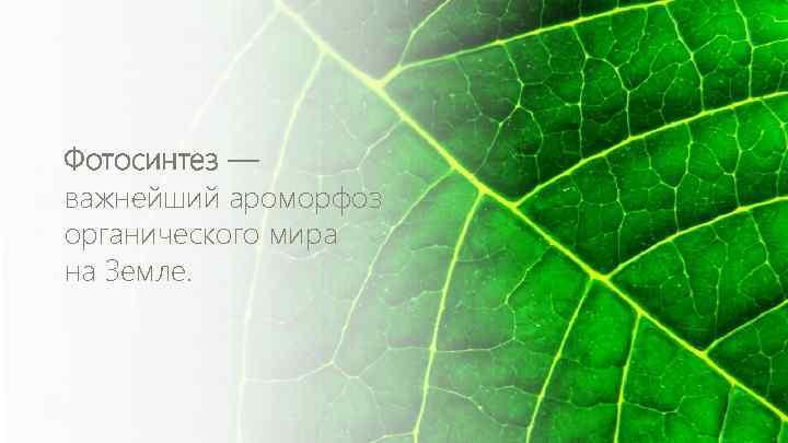 Фотосинтез — важнейший ароморфоз органического мира на Земле.