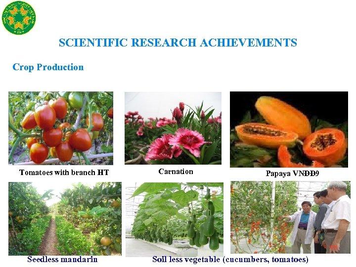 SCIENTIFIC RESEARCH ACHIEVEMENTS Crop Production Tomatoes with branch HT Seedless mandarin Carnation Papaya VNĐĐ