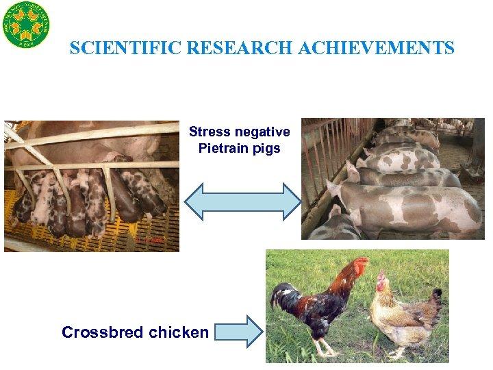 SCIENTIFIC RESEARCH ACHIEVEMENTS Stress negative Pietrain pigs Crossbred chicken