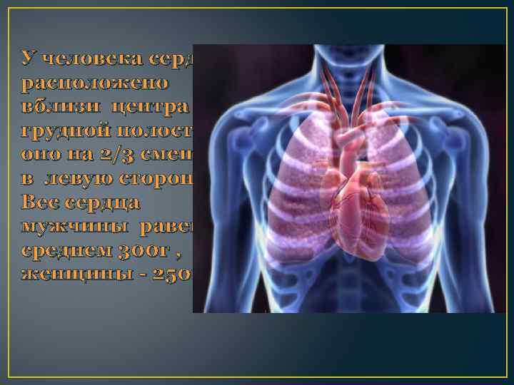 У человека сердце расположено вблизи центра грудной полости, оно на 2/3 смещено в левую