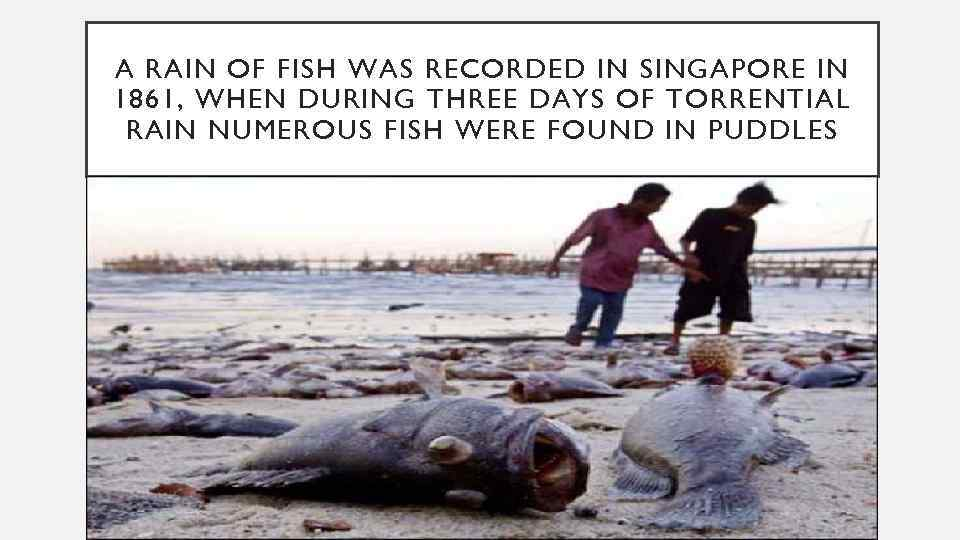 A RAIN OF FISH WAS RECORDED IN SINGAPORE IN 1861, WHEN DURING THREE DAYS