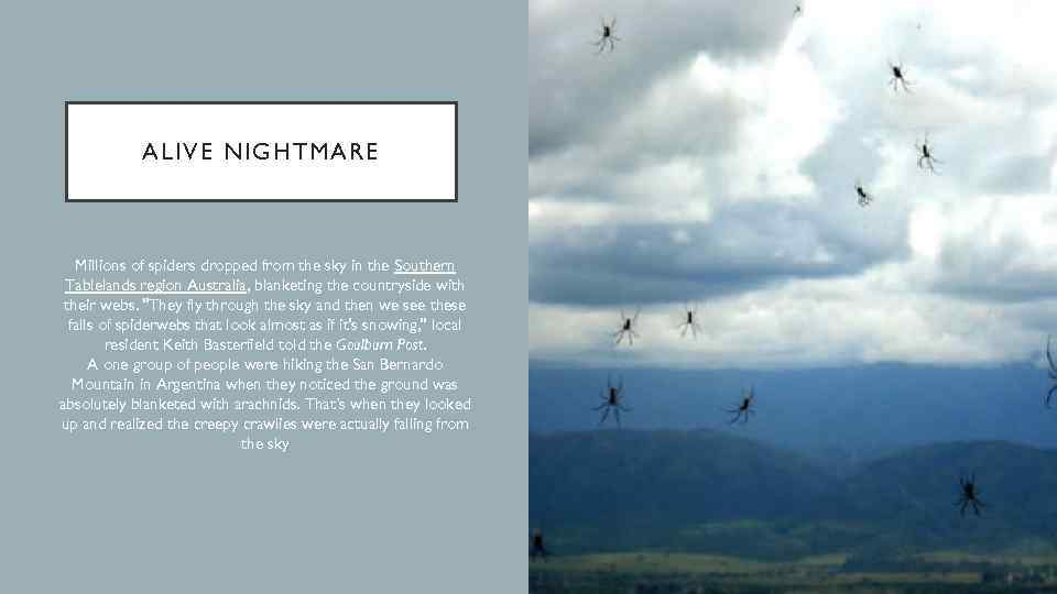 ALIVE NIGHTMARE Millions of spiders dropped from the sky in the Southern Tablelands region