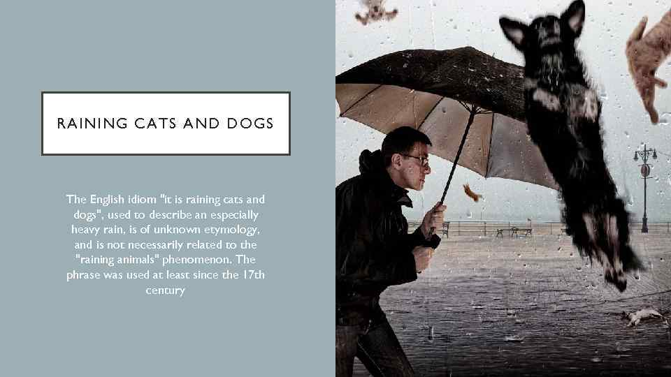 RAINING CATS AND DOGS The English idiom
