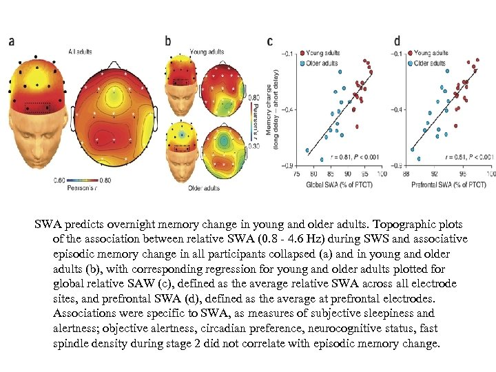 SWA predicts overnight memory change in young and older adults. Topographic plots of the
