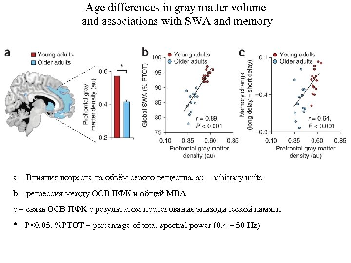 Age differences in gray matter volume and associations with SWA and memory a –