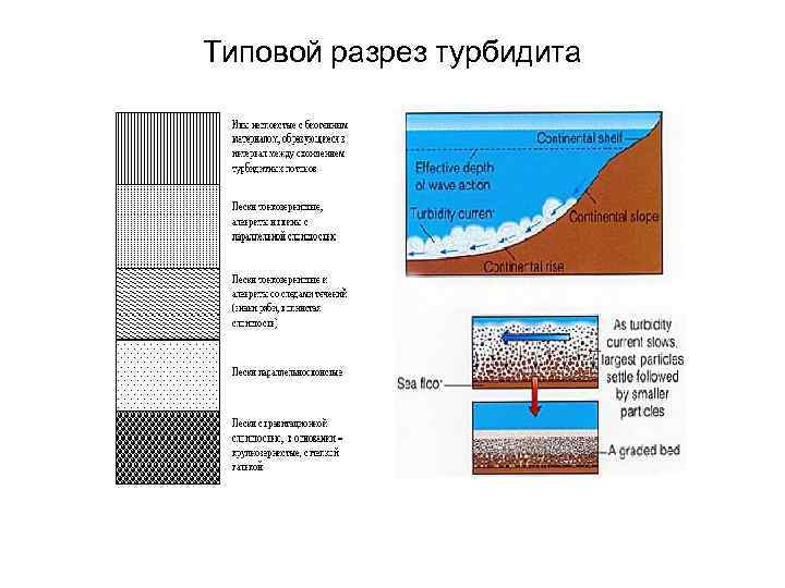 Типовой разрез турбидита