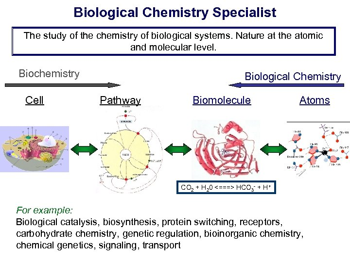Biological Chemistry Specialist The study of the chemistry of biological systems. Nature at the