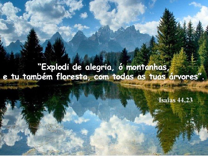 """""""Explodi de alegria, ó montanhas, e tu também floresta, com todas as tuas árvores""""."""