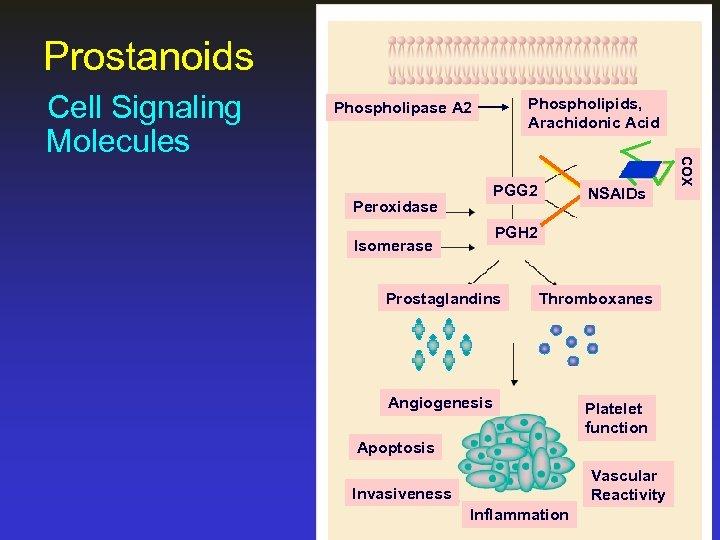 Prostanoids Phospholipids, Arachidonic Acid Phospholipase A 2 PGG 2 Peroxidase NSAIDs PGH 2 Isomerase