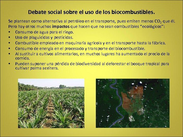 Debate social sobre el uso de los biocombustibles. Se plantean como alternativa al petróleo