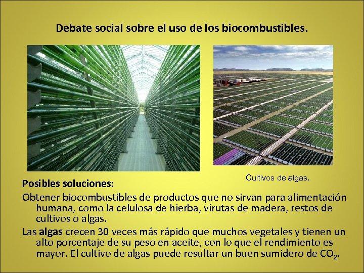 Debate social sobre el uso de los biocombustibles. Cultivos de algas. Posibles soluciones: Obtener