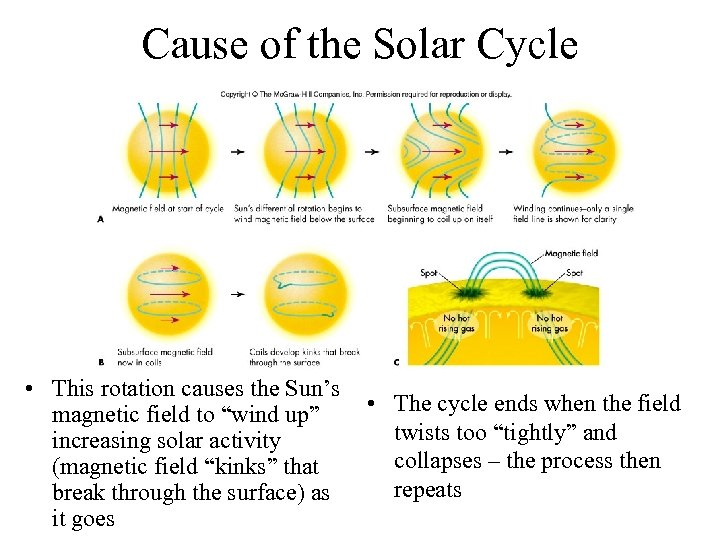 Cause of the Solar Cycle • This rotation causes the Sun's magnetic field to
