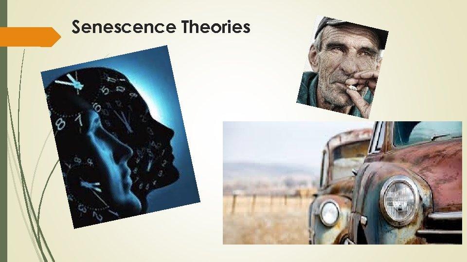 Senescence Theories