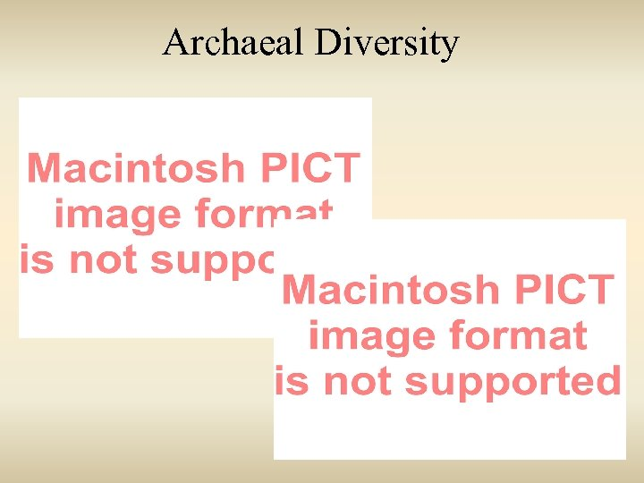 Archaeal Diversity