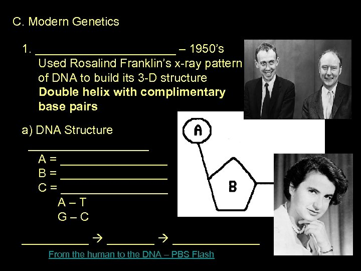 C. Modern Genetics 1. ___________ – 1950's Used Rosalind Franklin's x-ray pattern of DNA