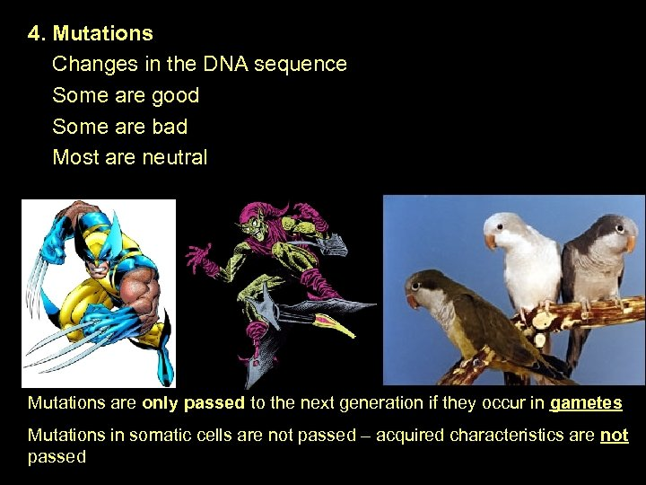 4. Mutations Changes in the DNA sequence Some are good Some are bad Most