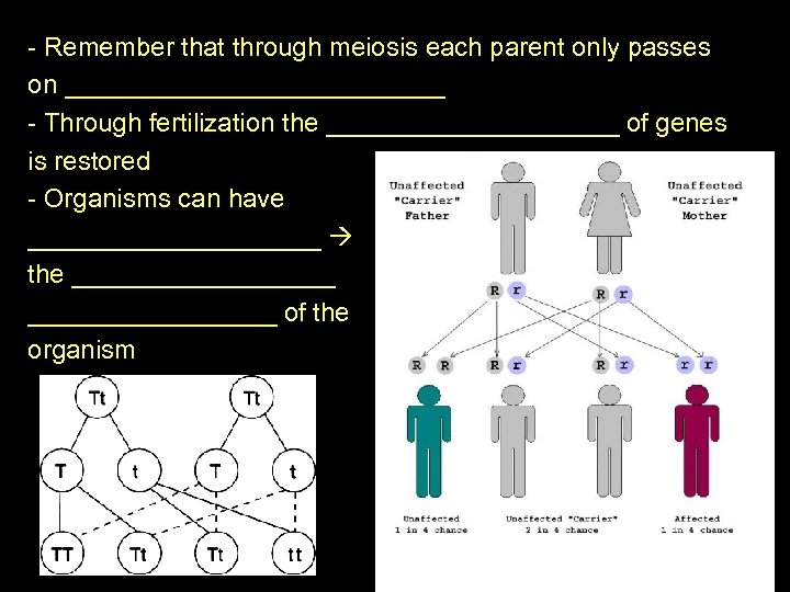 - Remember that through meiosis each parent only passes on _____________ - Through fertilization
