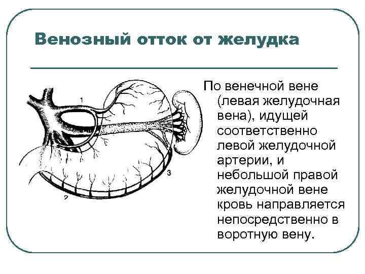 Венозный отток от желудка По венечной вене (левая желудочная вена), идущей соответственно левой желудочной