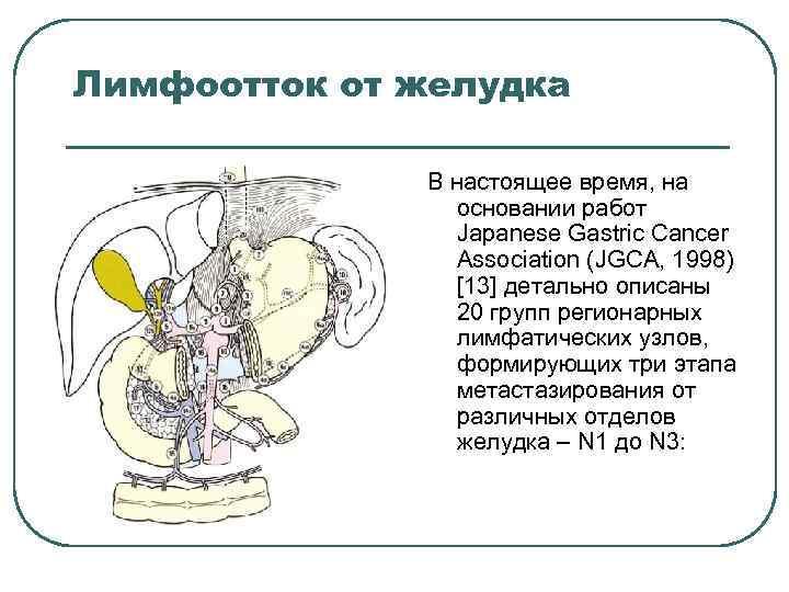 Лимфоотток от желудка В настоящее время, на основании работ Japanese Gastric Cancer Association (JGCA,