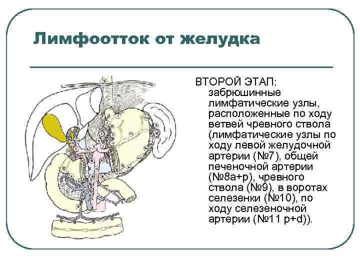Лимфоотток от желудка ВТОРОЙ ЭТАП: забрюшинные лимфатические узлы, расположенные по ходу ветвей чревного ствола